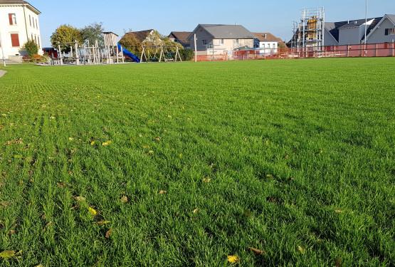 Rasen und Rollrasen - Otto Keller Gartenbau AG